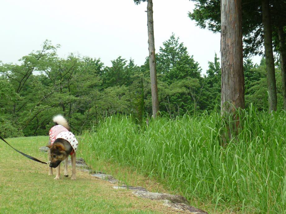 201408三重県民の森2-16