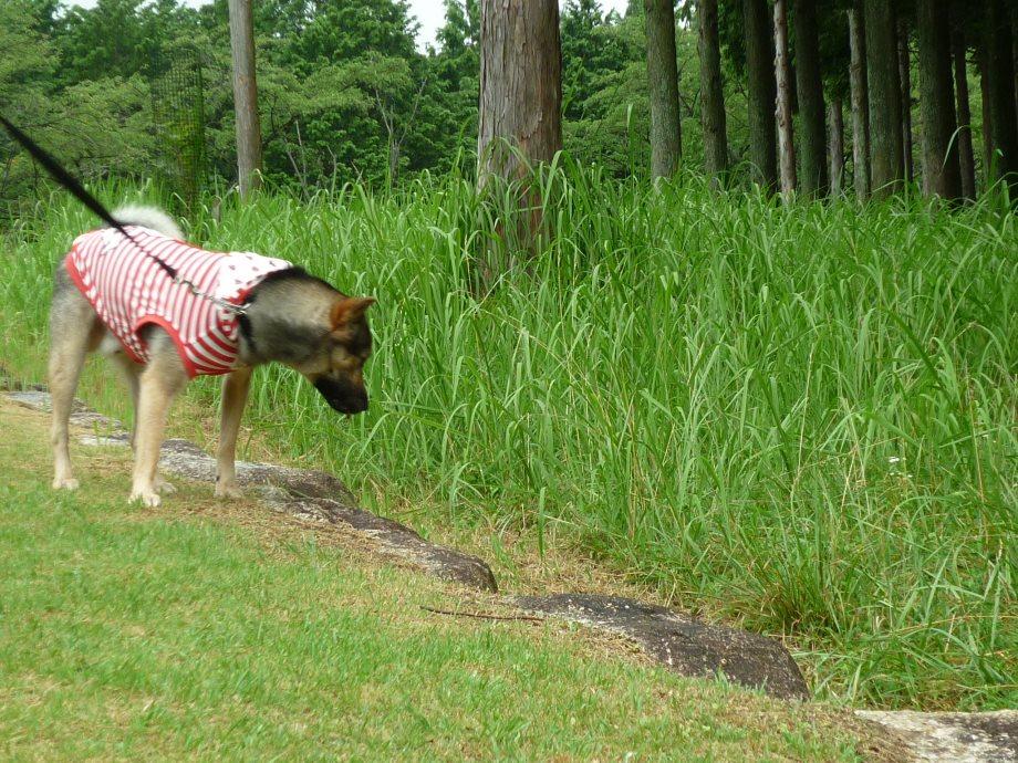 201408三重県民の森2-17