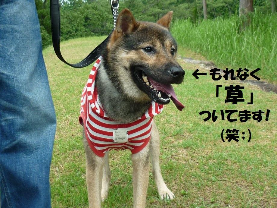 201408三重県民の森2-19