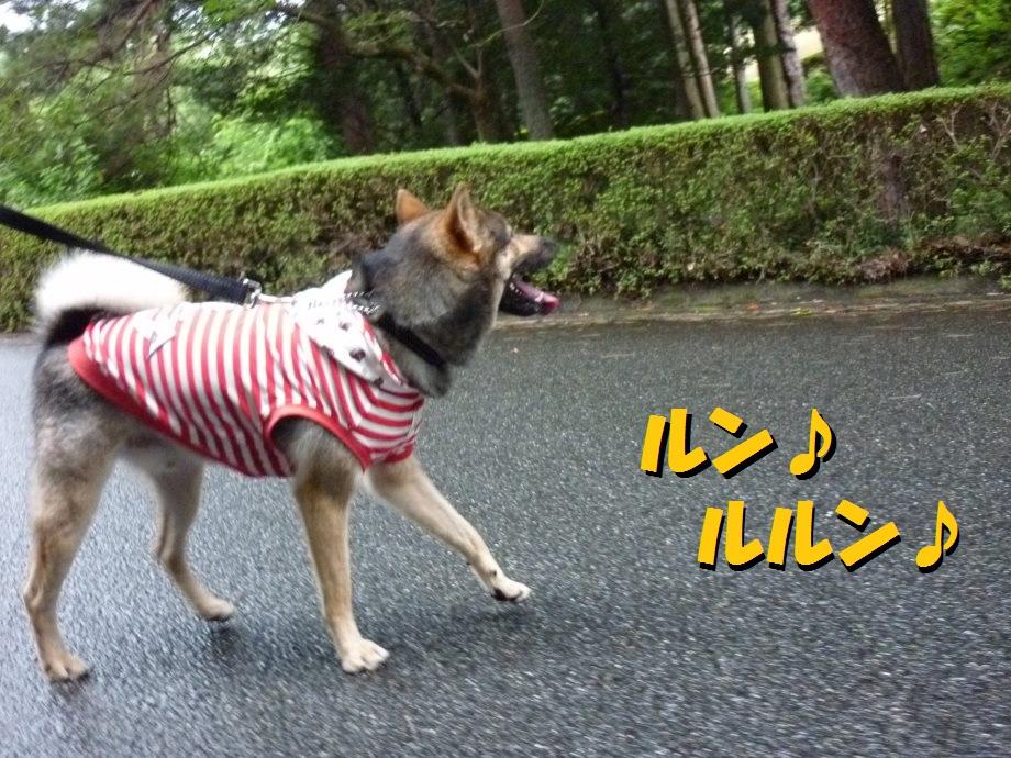 201408三重県民の森2-22