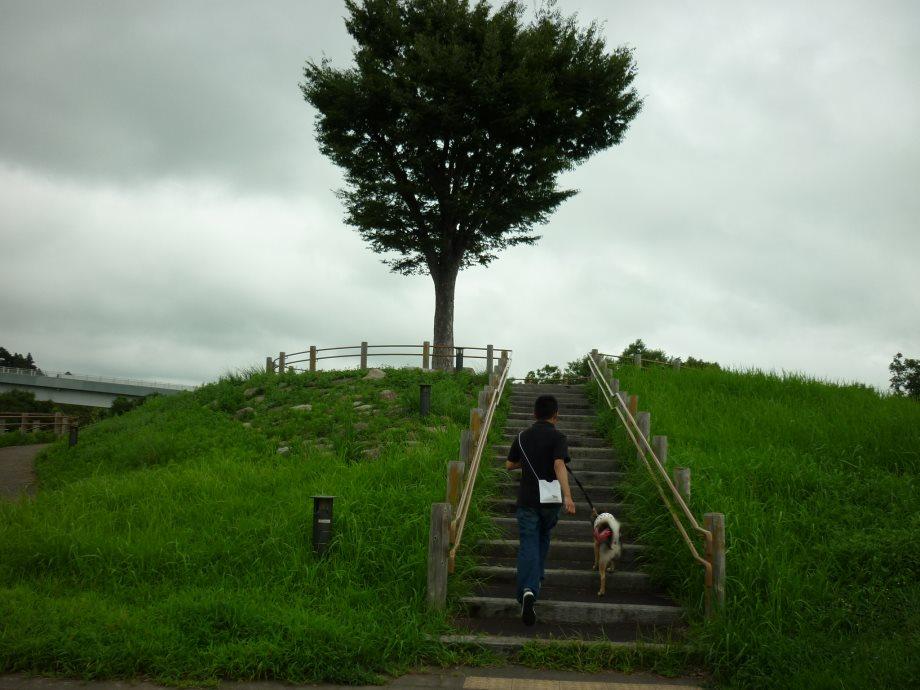 201408三重県民の森3-19