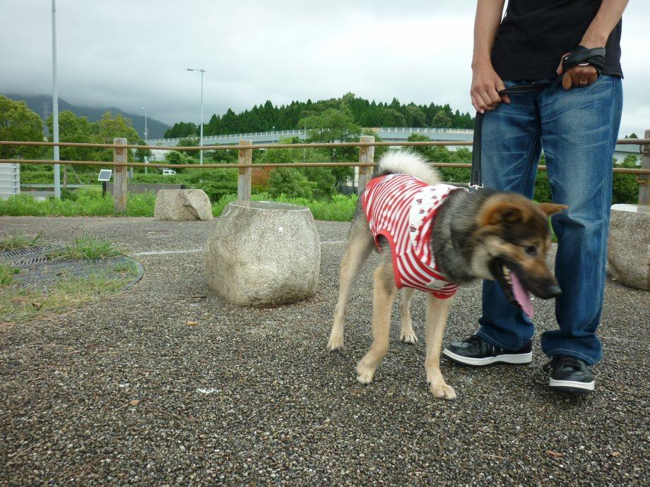 201408三重県民の森3-20