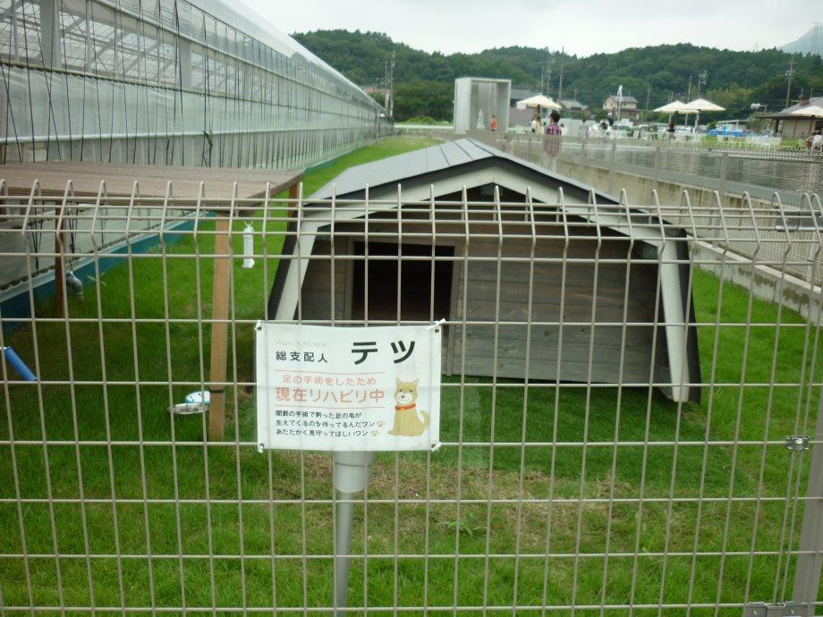 201408県民の森北斗君4-05