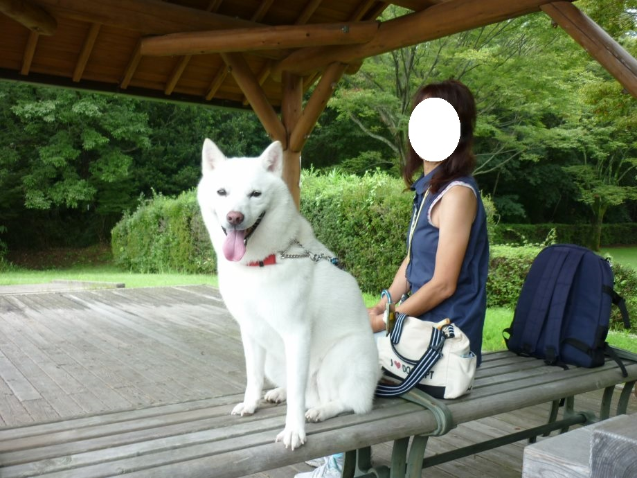 201408県民の森北斗君4-11