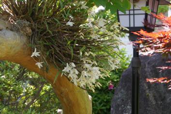 さるすべりの木