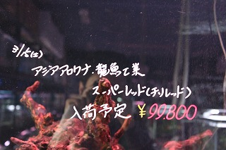 IMG_12041.jpg