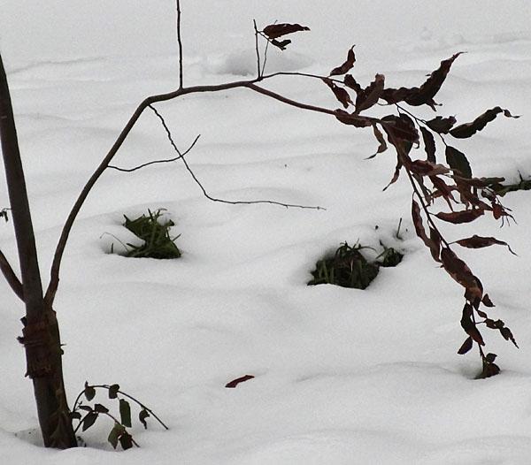 140215雪子