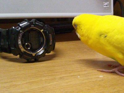 時計さ~ん♪