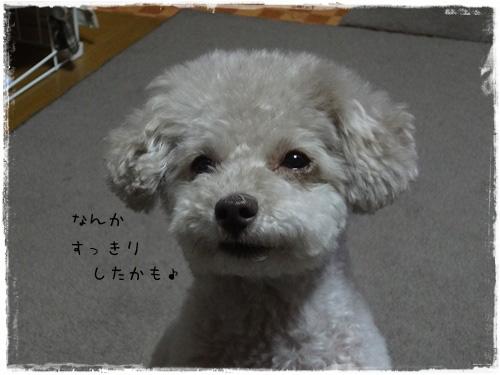 DSC02624d.jpg
