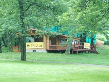 カブトムシの森2009年