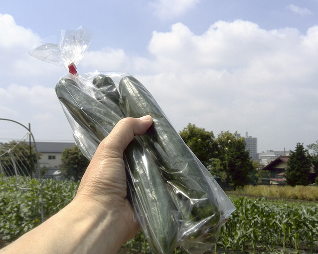 新鮮な胡瓜をゲットしました