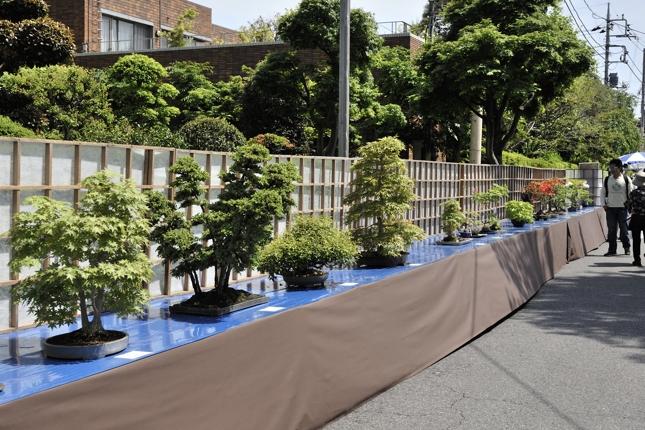 見事な盆栽が展示されてます。