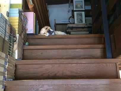 階段の上には・・・。