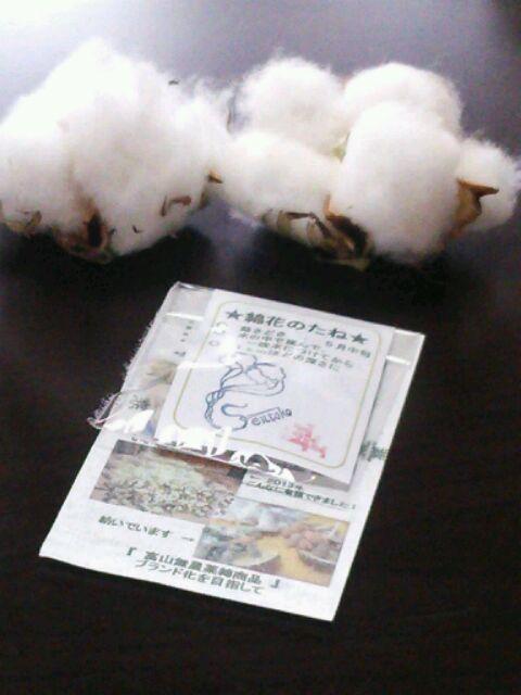 畑でとれた綿
