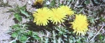 春104-340