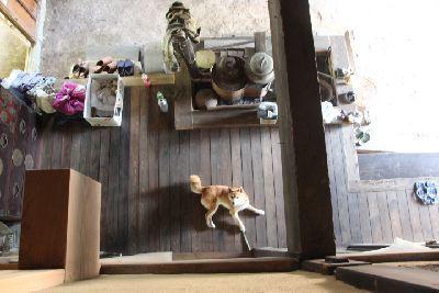 古民家の囲炉裏端と柴犬の俯瞰