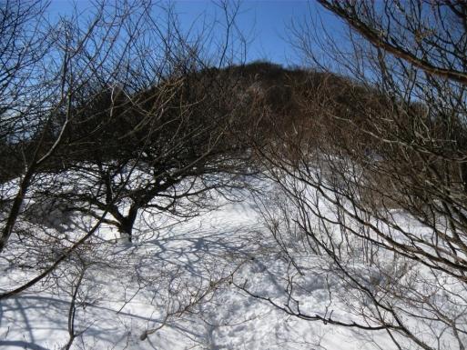 山頂手前の枝漕ぎ道