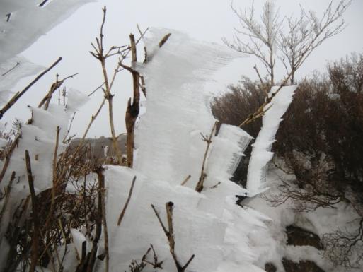 ビッシリ霧氷