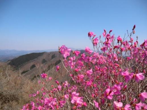 桐生岳山頂