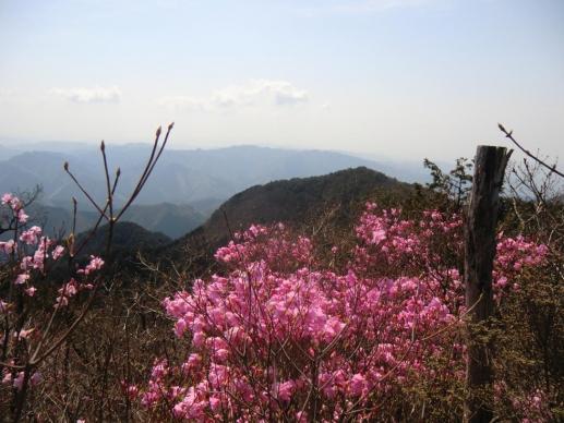 仙人ヶ岳方向