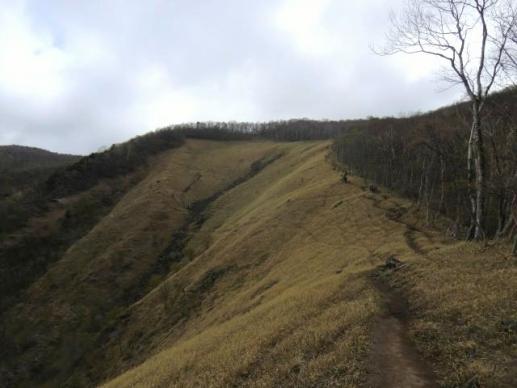笹原の開放的な道