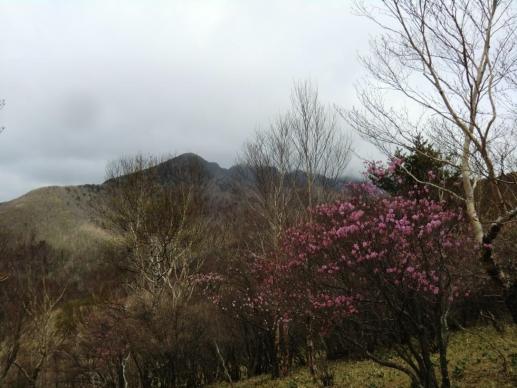 アカヤシオと前袈裟丸山