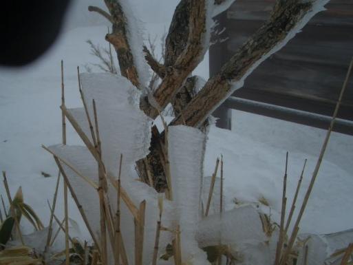 笹につく霧氷