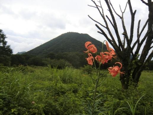 コオニユリと榛名富士