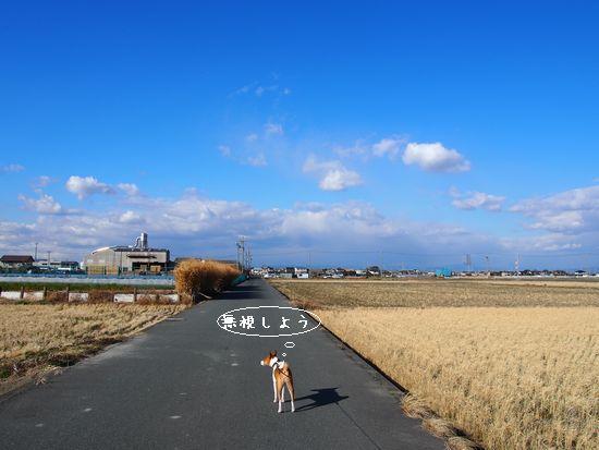 午後の散歩にお写真はなしですぅ。