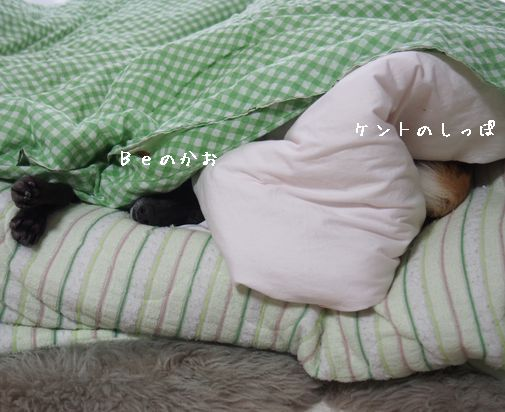 わたしも眠い。
