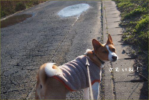 今日は耳あてをしてきたから寒くないもん。