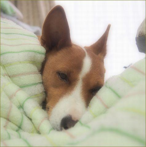 今日は寝て曜日。