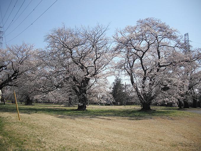 2003_ph02変電所桜01