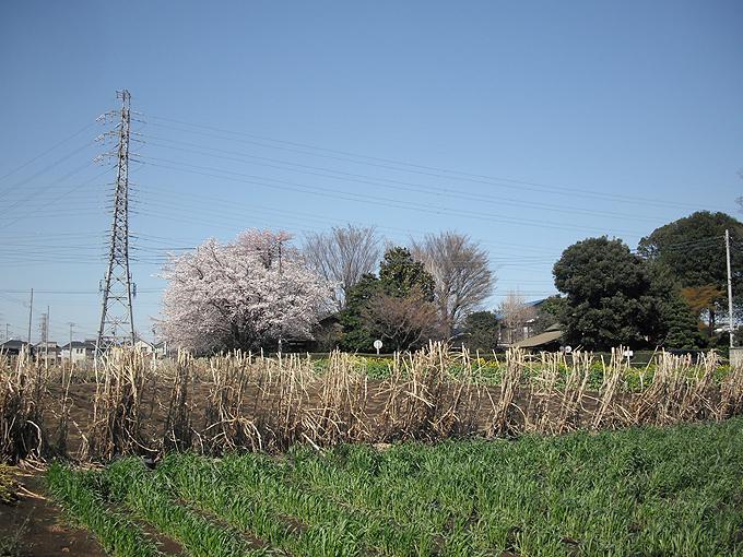 2003_ph09変電所裏畑地