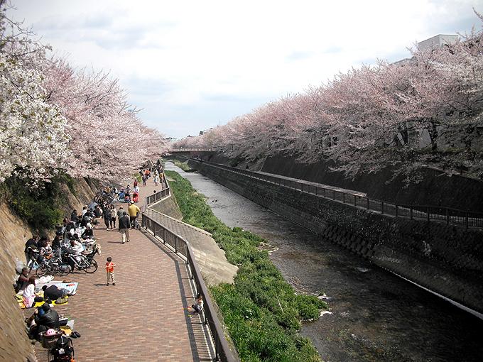 2003_ph12石神井川桜02