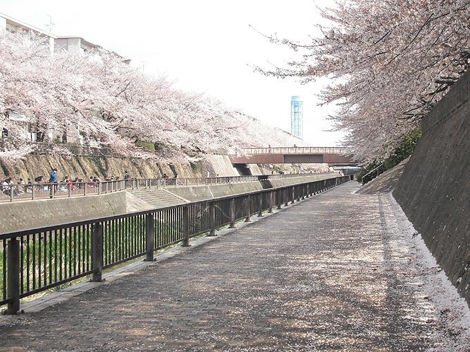 2003_ph14石神井川桜04