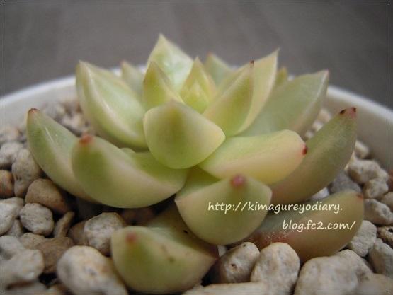 黄麗錦(新) (2)