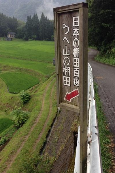 うへ山の棚田 2014・7月6日 (2)