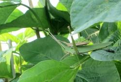 2014 grasshopper2