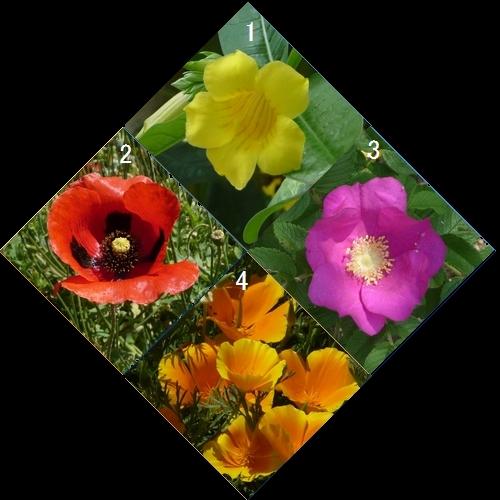 ひし形お花