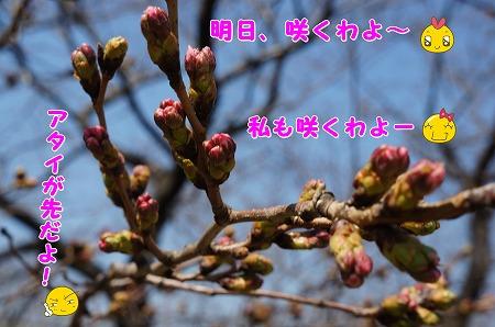 DSC07561.jpg