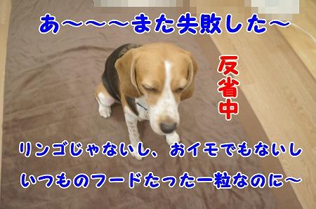 DSC08168.jpg
