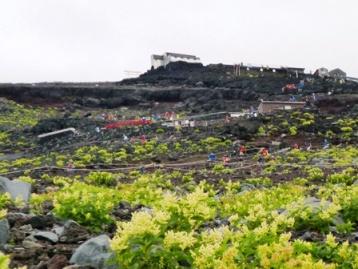 植物と山小屋