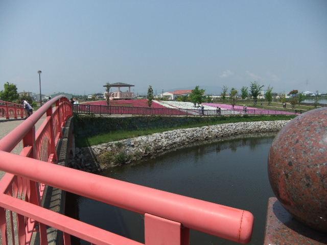 芝桜赤い橋