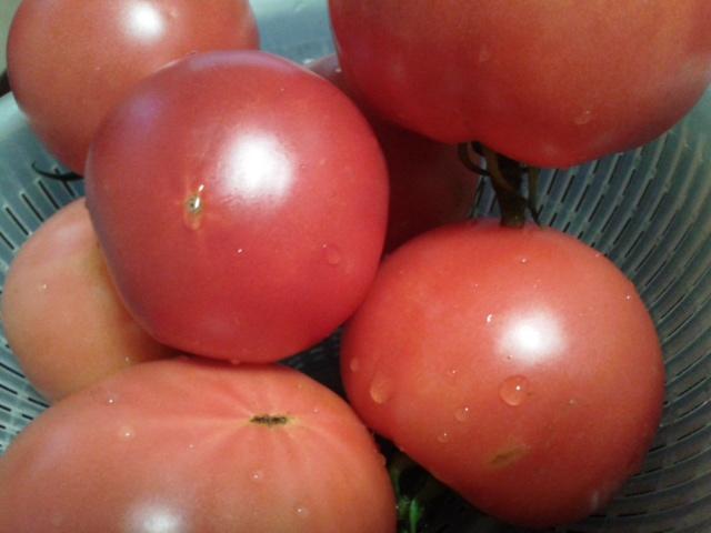 トマト2014
