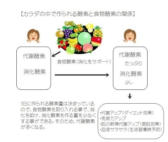 酵素の働き