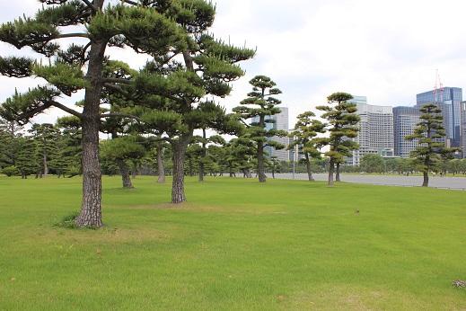 クロマツ林