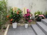 大阪本部道場からお祝いの大きな花鉢2つ