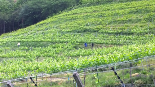 COCO FARM & WINERY