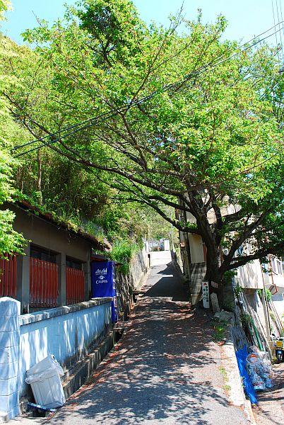 青谷道入口